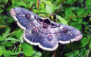 Природа Самурского реликтового лианового леса