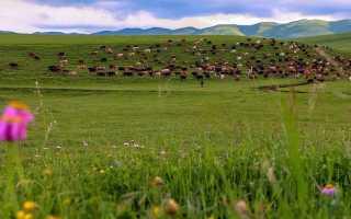 Курганы Дагестана