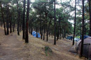 Палатки в сосновом бору, 2019